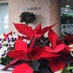 Fêtez Noël à Puerto Banús